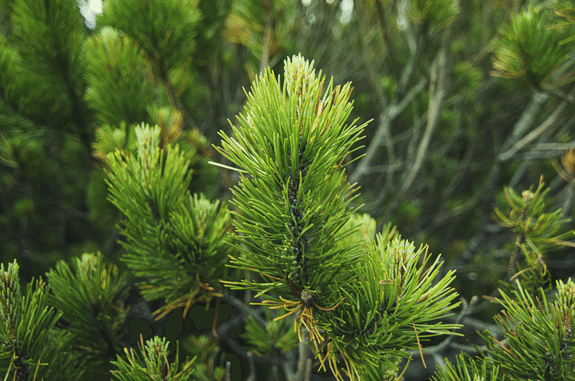 5 Tips to Creating Stellar Evergreen Content that Lasts